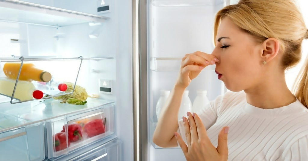 Fridge and Freezer Deodorizers: All You Need to Know